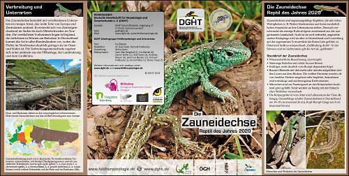 Zauneidechse_Flyer